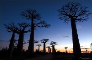 The Baobab avenue, Madagascar