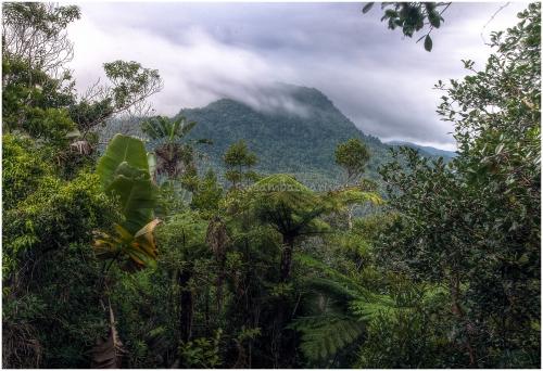 Betampona Strict Nature Reserve in eastern Madagascar