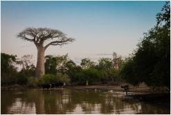 life around a baobab tree