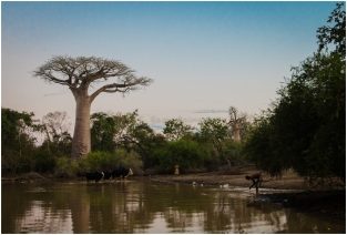 life around a baobab tree
